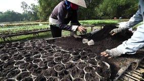 Ο ανθοκόμος φροντίζει τα λουλούδια, προετοιμάζεται για το σεληνιακό νέο έτος απόθεμα βίντεο