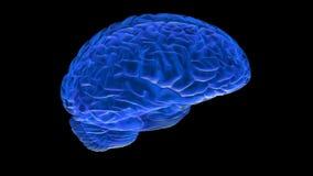 Ο ανθρώπινος εγκέφαλος τρισδιάστατος δίνει ελεύθερη απεικόνιση δικαιώματος