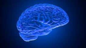 Ο ανθρώπινος εγκέφαλος τρισδιάστατος δίνει διανυσματική απεικόνιση