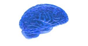 Ο ανθρώπινος εγκέφαλος τρισδιάστατος δίνει απεικόνιση αποθεμάτων