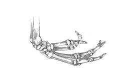 Ο ανθρώπινος σκελετός παραδίδει το σχεδιάγραμμα Στοκ φωτογραφία με δικαίωμα ελεύθερης χρήσης