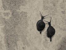 Ο ανταγωνισμός σαλιγκαριών στοκ φωτογραφία με δικαίωμα ελεύθερης χρήσης