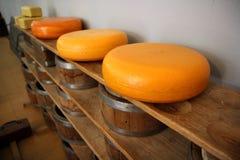 Ολλανδικά ολόκληρα τα τυριά σε έναν ξύλινο τοποθετούν σε ράφι Στοκ Εικόνες