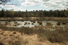 ολλανδική φύση Στοκ φωτογραφίες με δικαίωμα ελεύθερης χρήσης