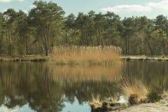 ολλανδική φύση Στοκ φωτογραφία με δικαίωμα ελεύθερης χρήσης