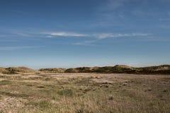 Ολλανδικοί αμμόλοφοι με τις αγελάδες Πέτεν Zwanenwater ορεινών περιοχών Στοκ Εικόνα