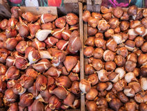Ολλανδικοί βολβοί τουλιπών στην αγορά Στοκ εικόνα με δικαίωμα ελεύθερης χρήσης