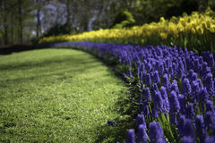 Ολλανδικό ίχνος λουλουδιών στοκ εικόνα με δικαίωμα ελεύθερης χρήσης