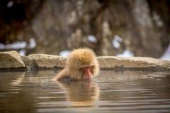 Ο απομονωμένος πίθηκος προειδοποιεί μέσα την καυτή άνοιξη Στοκ φωτογραφίες με δικαίωμα ελεύθερης χρήσης