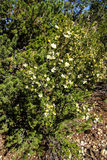 Ο απότομος βράχος αυξήθηκε Στοκ φωτογραφία με δικαίωμα ελεύθερης χρήσης