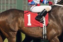 Ο αριθμός ένα άλογο προετοιμάζεται να εισαγάγει την πύλη έναρξης σε Horserace Στοκ εικόνες με δικαίωμα ελεύθερης χρήσης