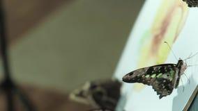 Ο αρσενικός καλλιτέχνης easel σύρει ένα λουλούδι εκτός από μια πεταλούδα κάθεται 4k απόθεμα βίντεο