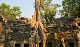 Ο αρχαίος ναός καταστρέφει κοντά σε Angkor Wat, Siem συγκεντρώνει, Καμπότζη Ανάπτυξη δέντρων από την καταστροφή πετρών Στοκ εικόνα με δικαίωμα ελεύθερης χρήσης
