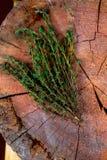 ο αρωματικός φρέσκος κήπος ανασκόπησης συγκόμισε χορταριών χορταριών λογικό θυμάρι δεντρολιβάνου μαϊντανού μεντών το παλαιό ξύλιν Στοκ Φωτογραφίες