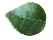 Ο ασβέστης Kaffir είναι φρούτα εγγενή στην τροπική Ασία σε ένα άσπρο υπόβαθρο Στοκ εικόνες με δικαίωμα ελεύθερης χρήσης