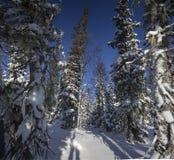 Ο δασικός Βορράς Urals5 χειμερινών βουνών Στοκ Εικόνα
