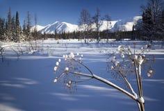 Ο δασικός Βορράς Urals16 χειμερινών βουνών Στοκ Εικόνες