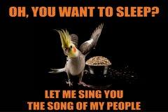 Ο αστείος παπαγάλος meme, εσείς θέλει να κοιμηθεί; , Με επιτρέψτε να σας τραγουδήσω το τραγούδι των ανθρώπων μου δροσίστε memes κ στοκ φωτογραφίες με δικαίωμα ελεύθερης χρήσης