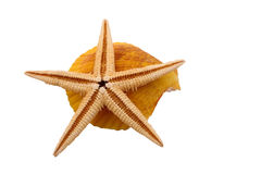 Ο αστερίας με το κοχύλι στο άσπρο υπόβαθρο Στοκ φωτογραφίες με δικαίωμα ελεύθερης χρήσης