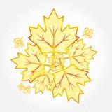 Ο αφηρημένος διαφανής σφένδαμνος φθινοπώρου βγάζει φύλλα ελεύθερη απεικόνιση δικαιώματος