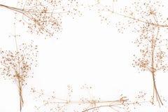 Ο αφηρημένος καφετής κλαδίσκος του ξηρού θάμνου με τους μικρούς ανοικτούς σπόρους καρύων, λουλούδια, απομόνωσε τα στοιχεία στο άσ Στοκ φωτογραφία με δικαίωμα ελεύθερης χρήσης