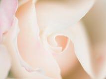 Ο αφηρημένος μακρο πυροβολισμός όμορφου άσπρου αυξήθηκε λουλούδι r Στοκ Φωτογραφίες
