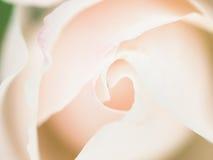Ο αφηρημένος μακρο πυροβολισμός όμορφου άσπρου αυξήθηκε λουλούδι r Στοκ Εικόνες