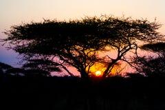 Ο αφρικανικός ήλιος ρύθμισης Στοκ Φωτογραφία