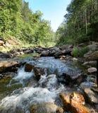 Ο αφρός των ορμητικά σημείων ποταμού ποταμών σε μια δασώδη περιοχή Στοκ Εικόνες