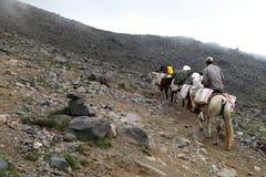 Ο αχθοφόρος και τα άλογα, τοποθετούν Agri Ararat στοκ εικόνες με δικαίωμα ελεύθερης χρήσης
