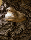 Ο βάτραχος δέντρων και το θύμα του Στοκ Εικόνες