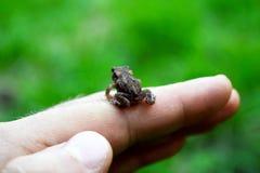 Ο βάτραχος Στοκ Εικόνα