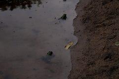 Ο βάτραχος Στοκ φωτογραφία με δικαίωμα ελεύθερης χρήσης