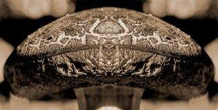 Ο βασιλιάς μανιταριών διανυσματική απεικόνιση