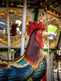 Ο βασιλοπρεπής κόκκορας σε έναν εύθυμο πηγαίνει γύρω από στοκ εικόνες με δικαίωμα ελεύθερης χρήσης