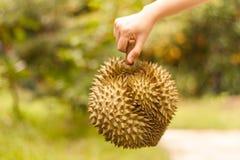 Ο βασιλιάς των φρούτων, φρέσκο Durian είναι λαβή στο ανθρώπινο χέρι με το boke Στοκ εικόνα με δικαίωμα ελεύθερης χρήσης