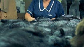 Ο βιομηχανικός εργάτης βουρτσίζει τη ζωική γούνα σε έναν πίνακα, κλείνει επάνω φιλμ μικρού μήκους