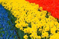 ο βολβός χρωματίζει τα λ&omi Στοκ Φωτογραφίες
