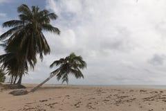 Ο Βορράς coastile, Rio Grande κάνει Norte, Βραζιλία Στοκ Φωτογραφίες