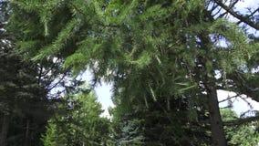 Ο βοτανικός κήπος στο Βιτσέμπσκ φιλμ μικρού μήκους