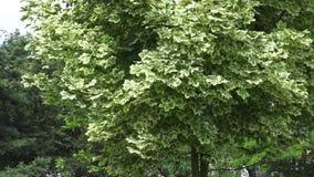 Ο βοτανικός κήπος στο Βιτσέμπσκ απόθεμα βίντεο