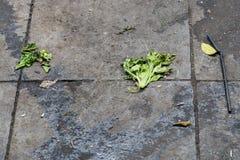 Ο βρώμικος με το πεζοδρόμιο πατωμάτων πετρών απορριμάτων στην οδό Στοκ Εικόνα