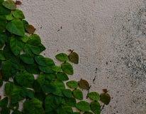 Ο βρώμικος τοίχος που καλύπτεται με το πράσινο velcro Στοκ Εικόνα