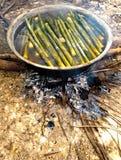 Ο βλαστός μπαμπού βράζει στο ζεστό νερό Στοκ Εικόνες