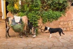 Ο γάιδαρος είναι οι πιό κοινοί μαροκινοί χωρικοί αρωγών Στοκ Φωτογραφία