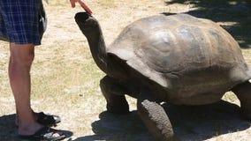 Ο γίγαντας Aldabra πηγαίνει στον τουρίστα φιλμ μικρού μήκους