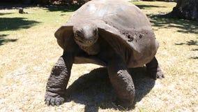 Ο γίγαντας Aldabra φιλμ μικρού μήκους