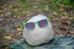 Ο γίγαντας puffball έντυσε στα γυαλιά ηλίου Στοκ φωτογραφία με δικαίωμα ελεύθερης χρήσης