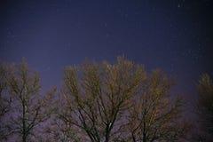 Ο γαλακτώδης τρόπος αυξάνεται πέρα από τα δέντρα πεύκων σε ένα πρώτο πλάνο Στοκ εικόνα με δικαίωμα ελεύθερης χρήσης