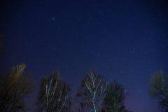 Ο γαλακτώδης τρόπος αυξάνεται πέρα από τα δέντρα πεύκων σε ένα πρώτο πλάνο Στοκ Φωτογραφίες